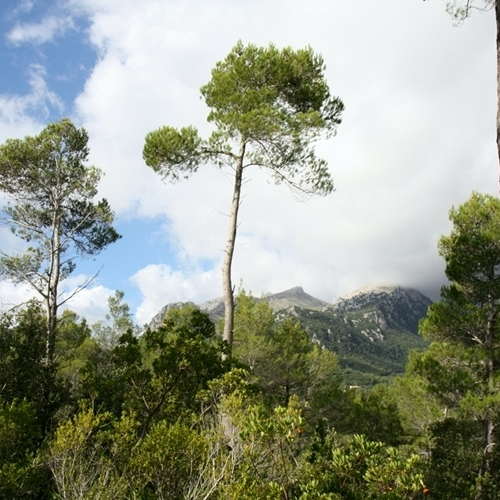 Guided walking in Mallorca - spring greenary